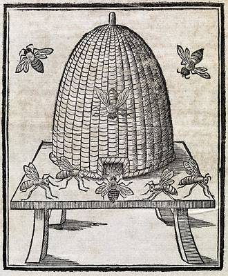 Bees And Beehive, 17th Century Artwork Art Print by Middle Temple Library