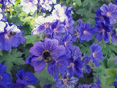 Photograph - Bees And Flowers by Samuel Pye