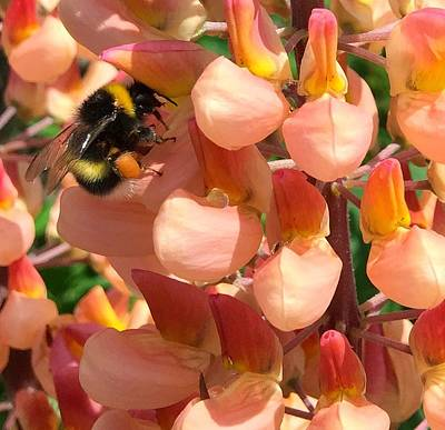 Photograph - Bees Are Buzzing by Caroline Reyes-Loughrey