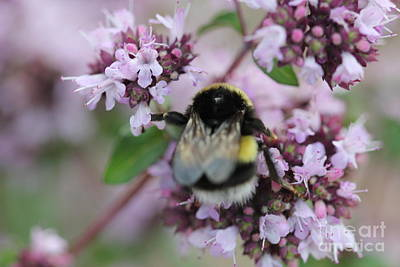 Photograph - Bee's Delicate Work by Donna Munro