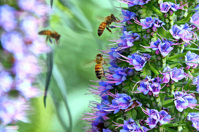 Photograph - Bees Gathering Nectar by Diana Haronis