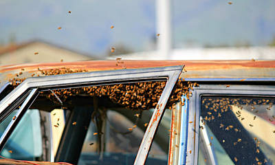 Wrecking Yard Photograph - Bees In A Chevy by Steve Natale