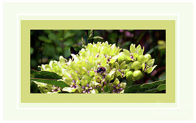 Photograph - Bees In Blooms by Shirley Moravec