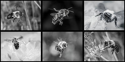 Photograph - Bees In Flight In Black And White by Len Romanick