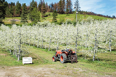 Photograph - Bees In The Orchard by Tom Cochran