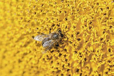 Photograph - Buzy Bee  by Deb Buchanan