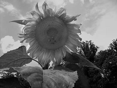 Digital Art - Bees On A Sunflower by Chris Flees