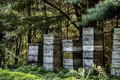 Photograph - Bees Streaking In Sunlight by Jeff Folger