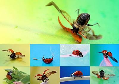 Beetle Collage Art Print