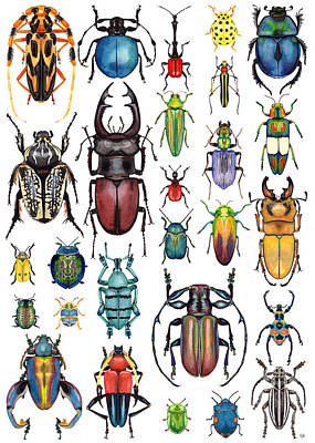 Rhinoceros Painting - Beetle Collection by Kelly Jade King