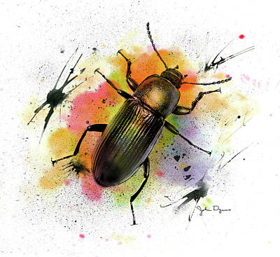 Drawing - Beetle Illustration by John Dyess