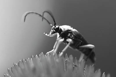 Beetle In Black And White Art Print by Brian Magnier