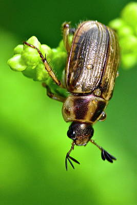 Photograph - Beetle by Jeffrey PERKINS