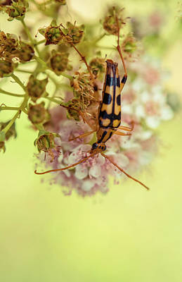 Photograph - Beetle On The Flower by Lilia D