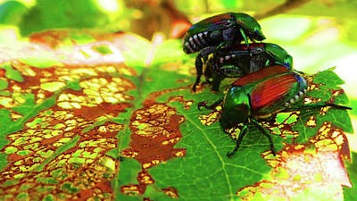 Photograph - Beetlemania-a Bugs Life by Mike Breau