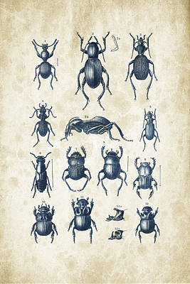 Insect Wall Art - Digital Art - Beetles - 1897 - 01 by Aged Pixel