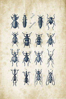 Bug Digital Art - Beetles - 1897 - 03 by Aged Pixel