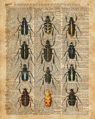 Collage Tapestries - Textiles Digital Art - Beetles Bugs Zoology Illustration Vintage Dictionary Art by Jacob Kuch