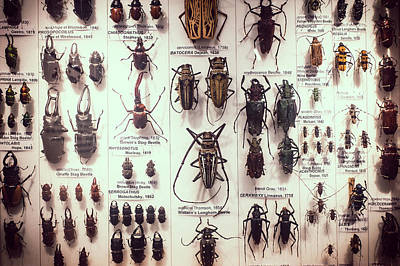 Specimen Photograph - Beetles by David Ridley