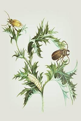 Beetle Mixed Media - Beetles With Larvae On A Thistle By Cornelis Markee 1763 by Cornelis Markee