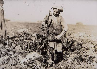 Sterling Painting - Beets Near Sterling by Lewis Hine