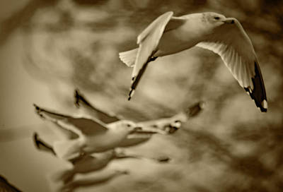 Photograph - Before Focus by Ray Congrove