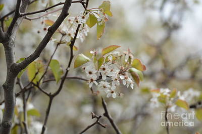 Photograph - Before The Spring Rain by Maria Urso