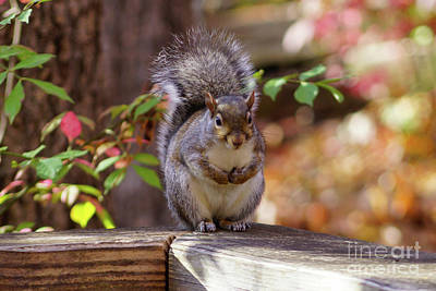 Photograph - Begging Squirrel by Jennifer White