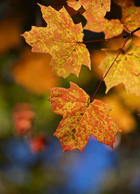 Photograph - Begin Autumn by Linda Shannon Morgan