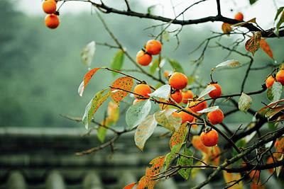 Photograph - Begining Of Fall by Hyuntae Kim