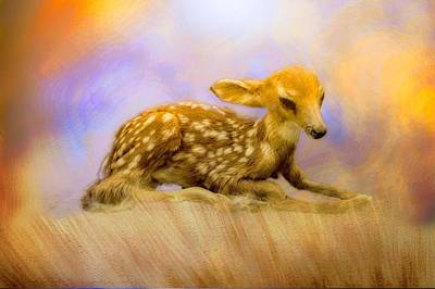 Beginning Fawn  Original by Ches Black