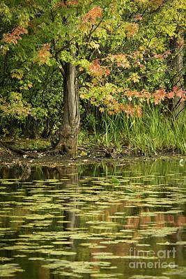Photograph - Beginning Of Autumn by Cheryl Baxter