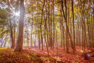 Photograph - Beginning Of Fall by Rima Biswas