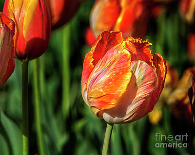 Spring Photograph - Beginning Of Spring Large Canvas Art, Canvas Print, Large Art, Large Wall Decor, Home Decor, by David Millenheft