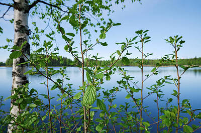 Photograph - Beginning Of Summer by Ismo Raisanen