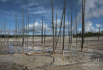 Photograph - Beginning Of The End - Yellowstone National Park by Sandra Bronstein