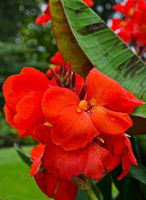 Photograph - Beginning September Thai Garden Canna 2 by Janis Nussbaum Senungetuk