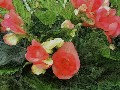 Photograph - Begonia 5 by Peggy Cooper