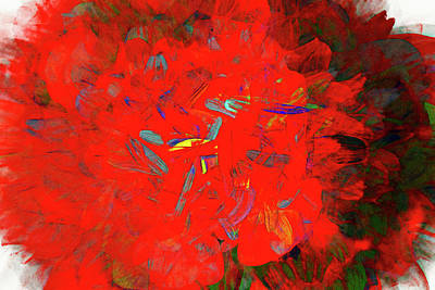 Photograph - Begonia Abstract by Kay Brewer