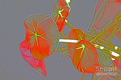 Photograph - Begonia Flowers Imprsionistic by David Frederick