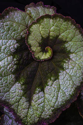 Begonia Photograph - Begonia Leaf Heart Shaped by Garry Gay