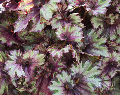 Dramatic Digital Art - Begonia Raspberry Swirl by Tim Gainey