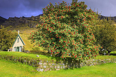 Photograph - Behind A Rowan Tree by Alexey Stiop