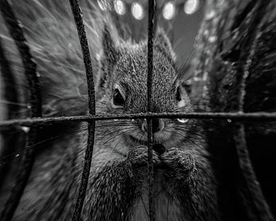 Photograph - Behind Bars by Bob Orsillo