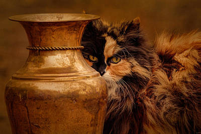 Staring Cat Photograph - Behind The Antique Vase by Jai Johnson