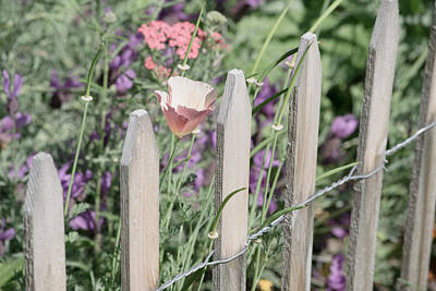Photograph - Behind The Garden Fence by Bonnie Bruno