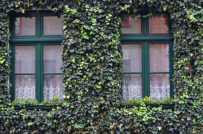 Photograph - Behind The Green Window by Haleh Mahbod