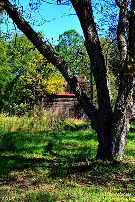 Photograph - Behind The Old Oak Tree Vertical by Lisa Wooten