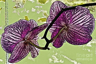 Indoor Plants Digital Art - Behind The Orchids by Gwyn Newcombe
