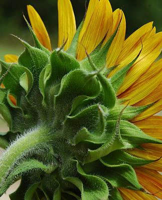 Photograph - Behind The Sun-flower by Lori Mellen-Pagliaro